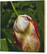 Wet Flower Wood Print