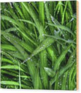 Wet Grass Wood Print