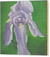 Wet Iris Wood Print