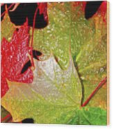 Wet Leaves Of Fall Wood Print