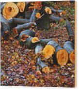 Wet Logs Wood Print
