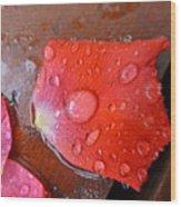 Wet Petal 1 Wood Print