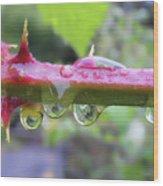Wet Prick Wood Print