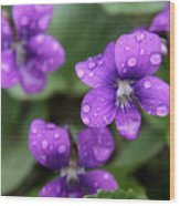 Wet Purple Violets Wood Print by Chris Hill