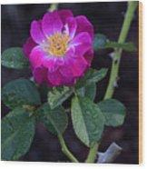 Wet Rose 2 Wood Print
