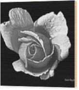 Wet Rose Portrait Wood Print