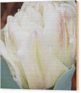 Wet Tulip Wood Print