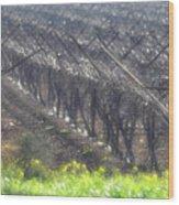 Wet Vineyard Wood Print