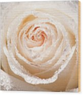 Wet White Rose Wood Print