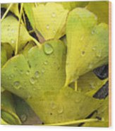 Wet Yellow Leaves 2 Wc  Wood Print