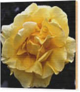 Wet Yellow Rose II Wood Print