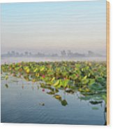 Wetlands Morning Mist  Wood Print