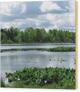 Wetlands Wood Print