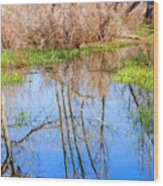 Wetlands Viewing Area In Chatfield State Park Wood Print