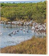 Wetlands Watering Hole Wood Print