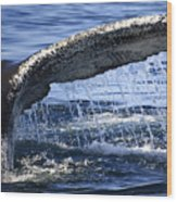 Whale Tail Wood Print