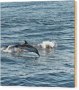 Whale Watching And Dolphins 1 Wood Print