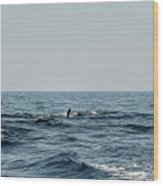 Whale Watching And Dolphins 2 Wood Print