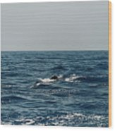 Whale Watching And Dolphins 3 Wood Print