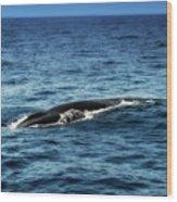 Whale Watching Balenottera Comune 3 Wood Print