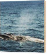 Whale Watching Balenottera Comune 5 Wood Print