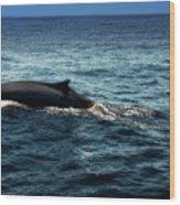 Whale Watching Balenottera Comune 6 Wood Print