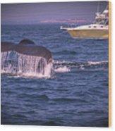 Whale Watching - Humpback Whale 3 Wood Print