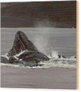 Whales Feeding Wood Print