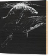 Whales Wood Print