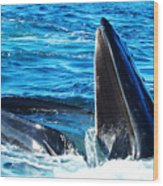 Whale's Opening Mouth Wood Print