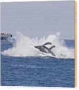 Whalewatcher Show Wood Print