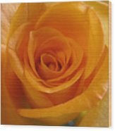 What Is In A Rose? Wood Print