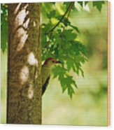 Whats A Woodpecker To Do Wood Print