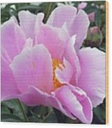 What's In A Name - Bowl Of Beauty Peony Wood Print