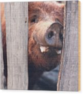 Whats New On Your Side Of The Fence Wood Print
