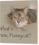 What's New Pussycat - Lily The Cat Wood Print