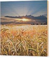 Wheat At Sunset Wood Print
