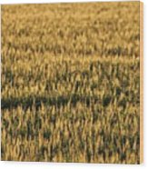 Wheat Beards Wood Print