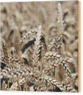 Wheat Close Up Summer Season Wood Print
