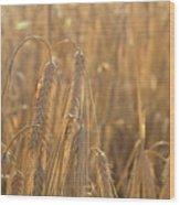 Wheat Wood Print