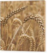 Wheat Ears 1 Wood Print