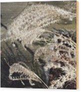Wheat Feathers Wood Print