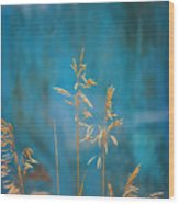 Wheat On Blue 1 Wood Print