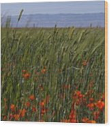 Wheat With Poppy  Wood Print