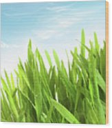 Wheatgrass Against A White Wood Print by Sandra Cunningham