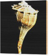 Whelk Sea Shell Wood Print