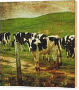 When The Cows Come Home . Photoart Wood Print