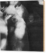 When You See Eye To Eye Wood Print
