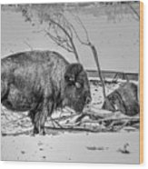 Where The Buffalo Rest Wood Print