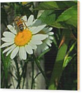 Where The Daisies Are Wood Print by Guy Ricketts